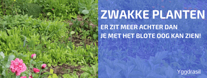 Zwakke Planten Zijn Zichtbaar Voor Slakken, Niet Voor Ons!