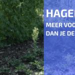 Een Haag Middenin je Moestuin?