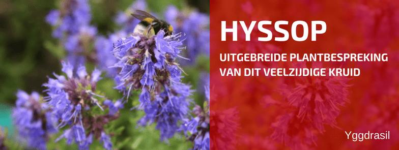 Plantenbespreking: Hyssopus officinalis (Hyssop)