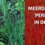 Praktische Meerdaagse cursus 'Permacultuur in de Moestuin'