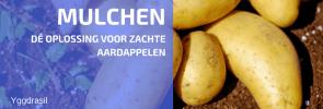 Is een Droog Seizoen een Probleem voor je Aardappelen?