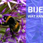 Lezing: Bijen in de Moestuin (door Joeri Cortens)