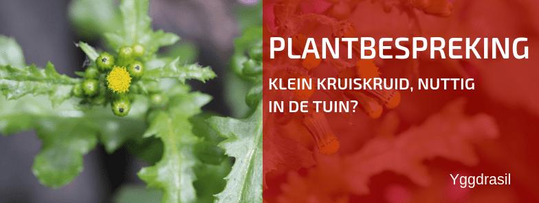 Plantbespreking: Klein Kruiskruid (Senecio vulgaris)