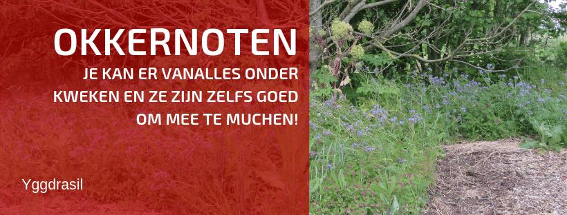 Kan je Zaaien en Planten Onder een Okkernoot?