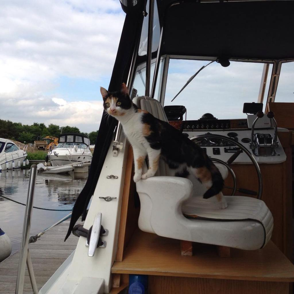 Sailing with a cat can help when you're trying to dock!