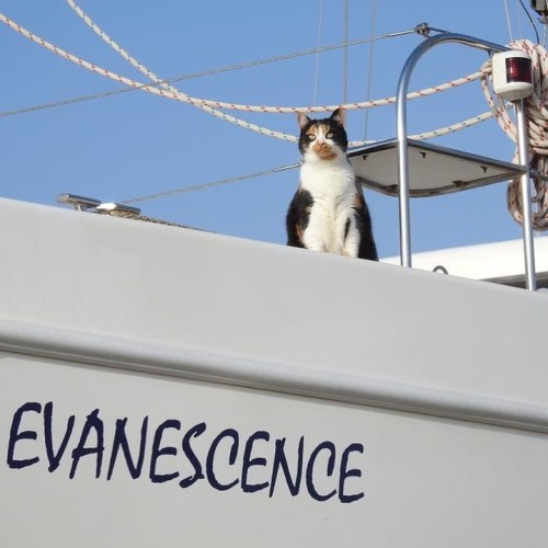 Jessie sailing on board Evanescence