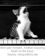 kitten-keys