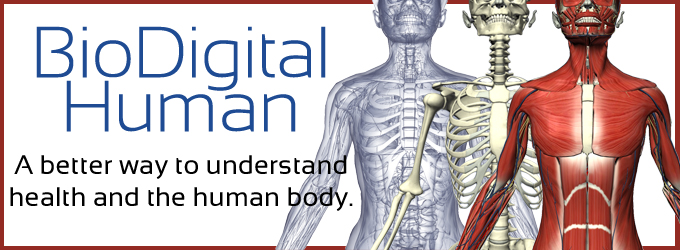 The Biodigital Human
