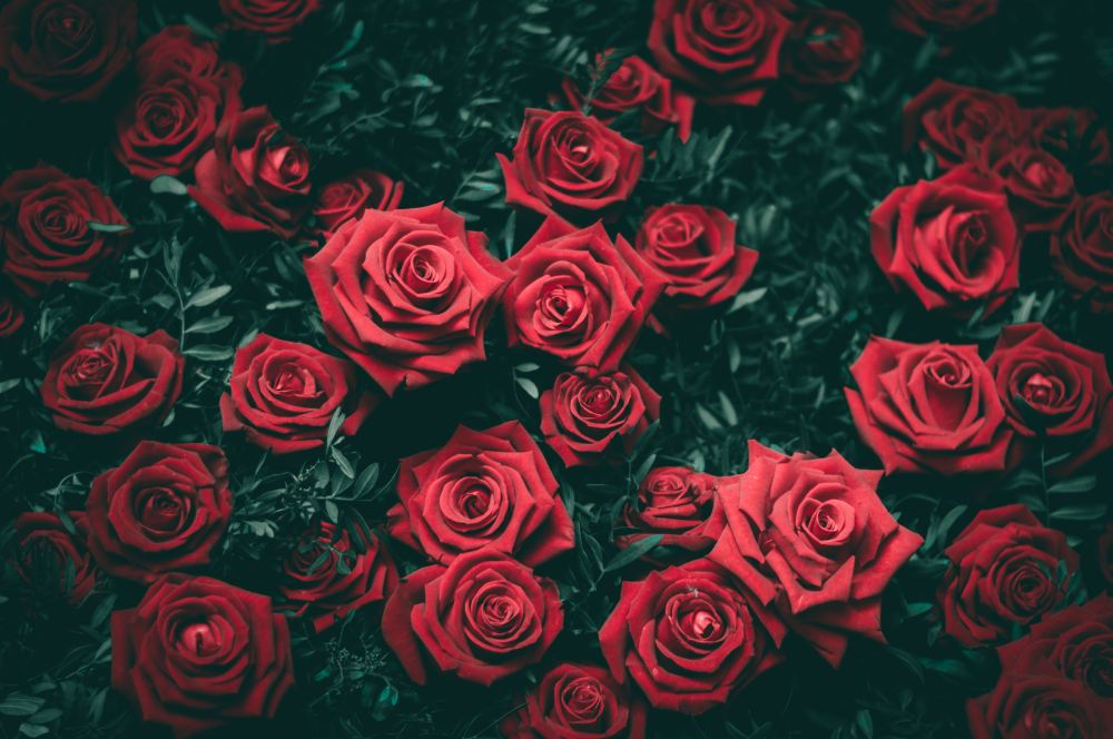 Top 50 Quotes On Rose Day to Send to your Loved Ones