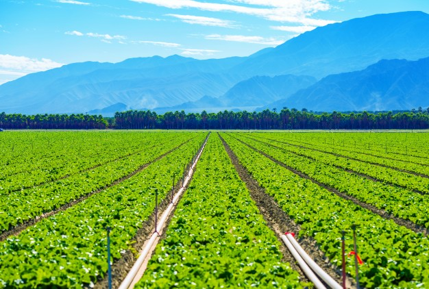 Agricultural Roadmap For A $5 Trillion Economy