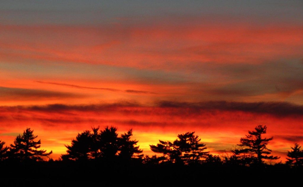A fiery red sunset glowing over the tops of trees in Portsmouth, NH.