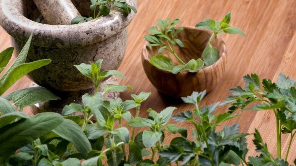 A Beginner S Guide To Growing A Kitchen Herb Garden Newhomesource