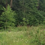 Running Zen: Doe in Gatineau Park