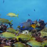 Manchones Reef, Isla Mujeres