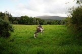"""View from Muckross House """"small farm"""""""