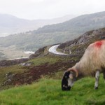 Wild Atlantic Way: Ring of Kerry, Skelligs, and Valentia Island
