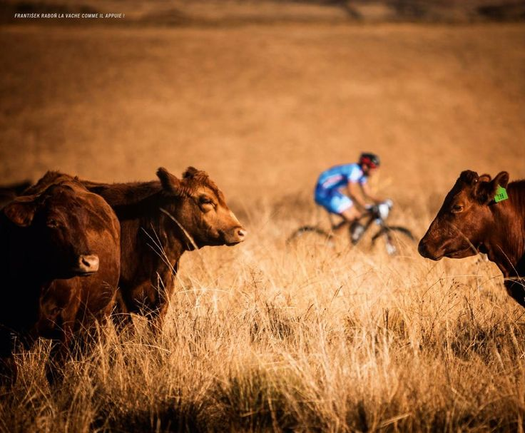 specialized-sworks-catalogue-vache
