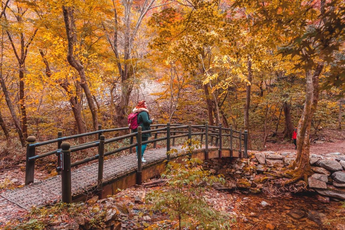 Ninaah Bulles, Corée du sud, korea, naejangsan, montage, automne, randonnée, feuille d'automne, blog voyage, voyage