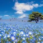 view post Flower Walk (hana sampo)