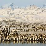 Peaks & Penguins in Antarctic Sunrise
