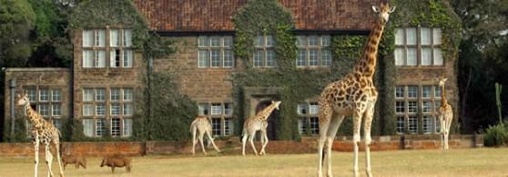Hotel con jirafas
