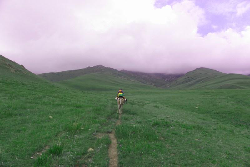 Kirgistan Pferd