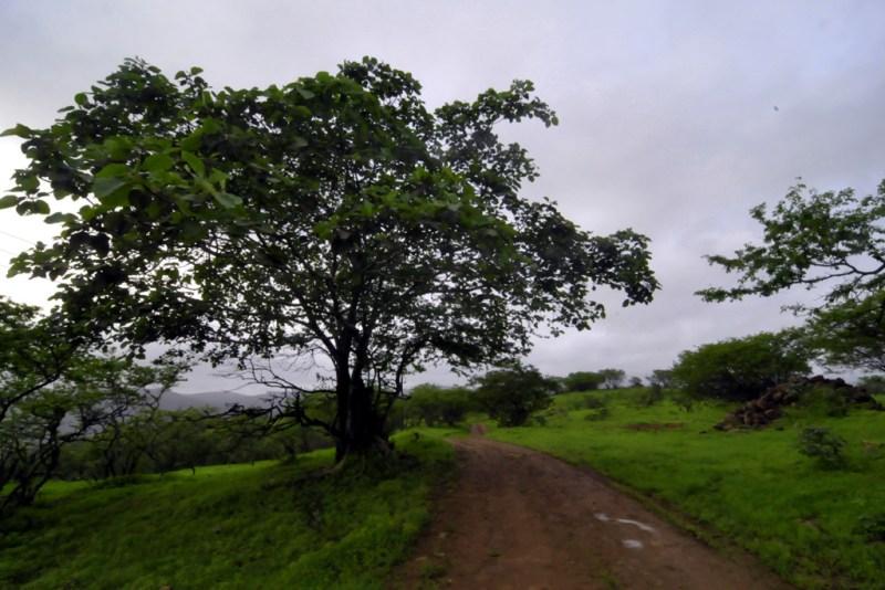 Oman: grüne Landschaft