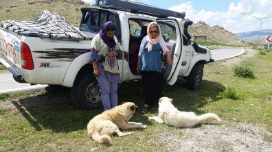 Hütehunde bewachen die Herden der Nomaden in den Bergen