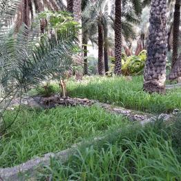 Falajsystem in einem Garten in Misfat Al Abryeen