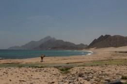 Kamel am indischen Ozean