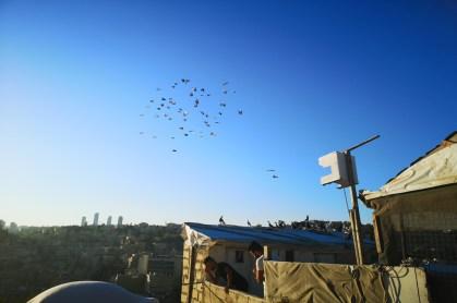 Taubenfliegen beim Sonnenuntergang