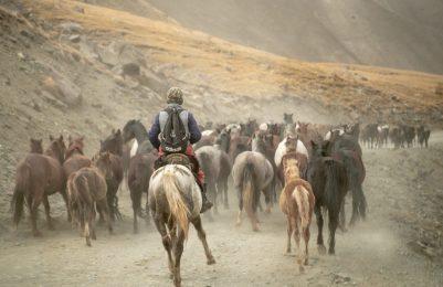 Pferdeabtrieb