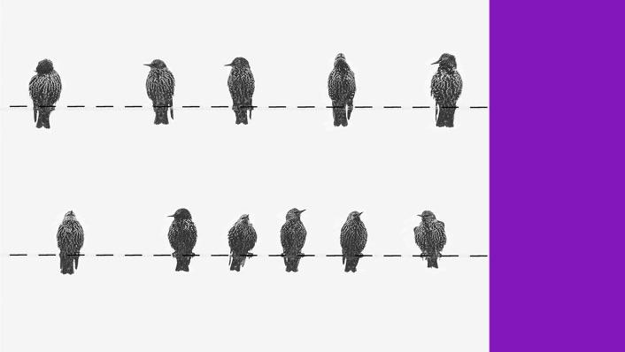 RDB NuConta: ilusração mostra fio com passarinhos pousados e uma barra roxa ao lado