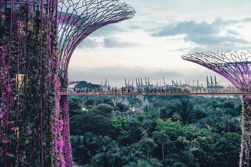 Custo de vida: vista do Supertree Grove, em Singapura, árvores gigantes feitas de metal iluminadas em roxo e erguidas sobre um jardim verde