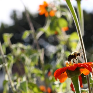 4 Lessons We Can Learn From Honey Bees