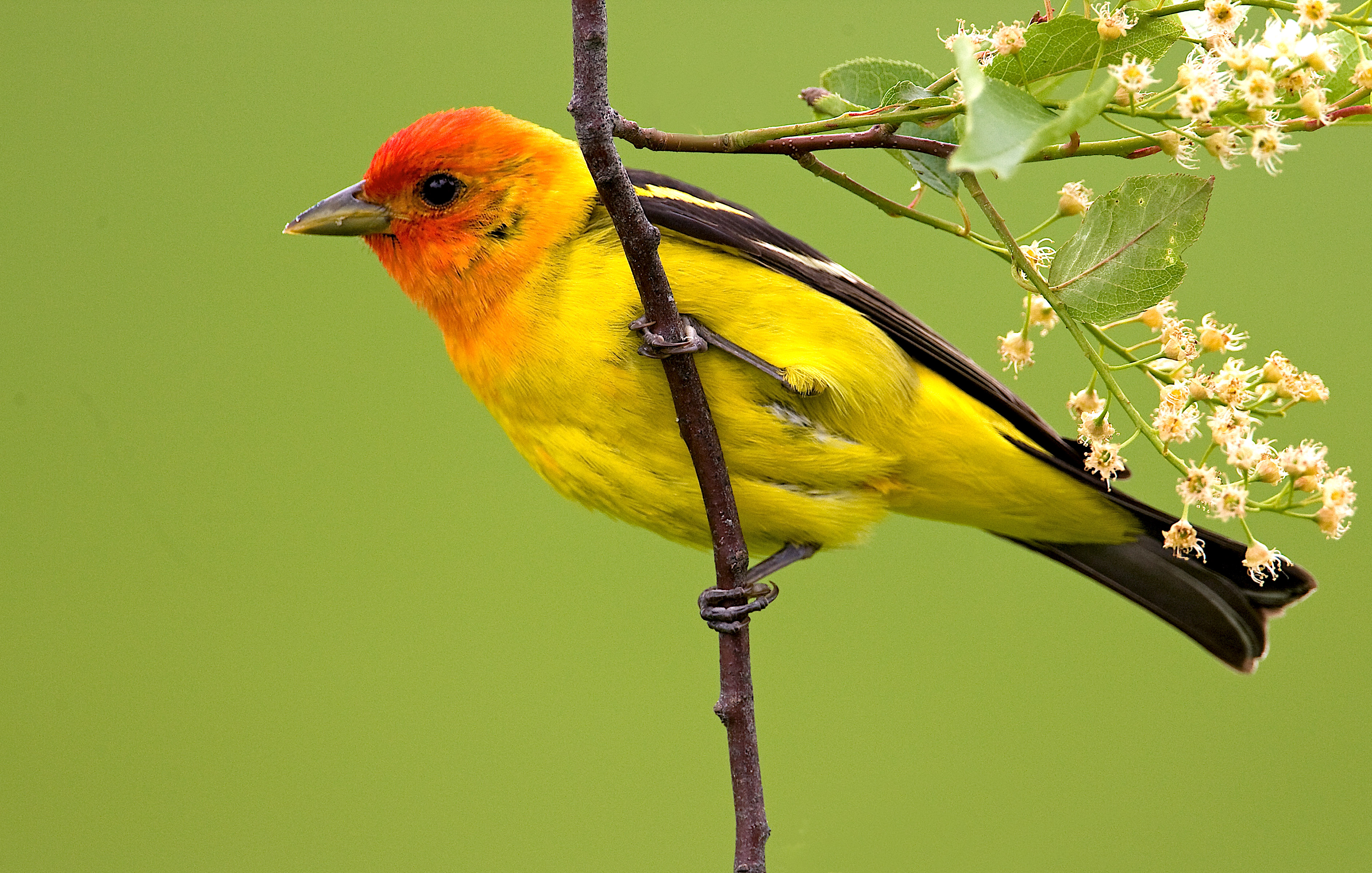Backyard Wildlife Color Of The Week Yellow The National