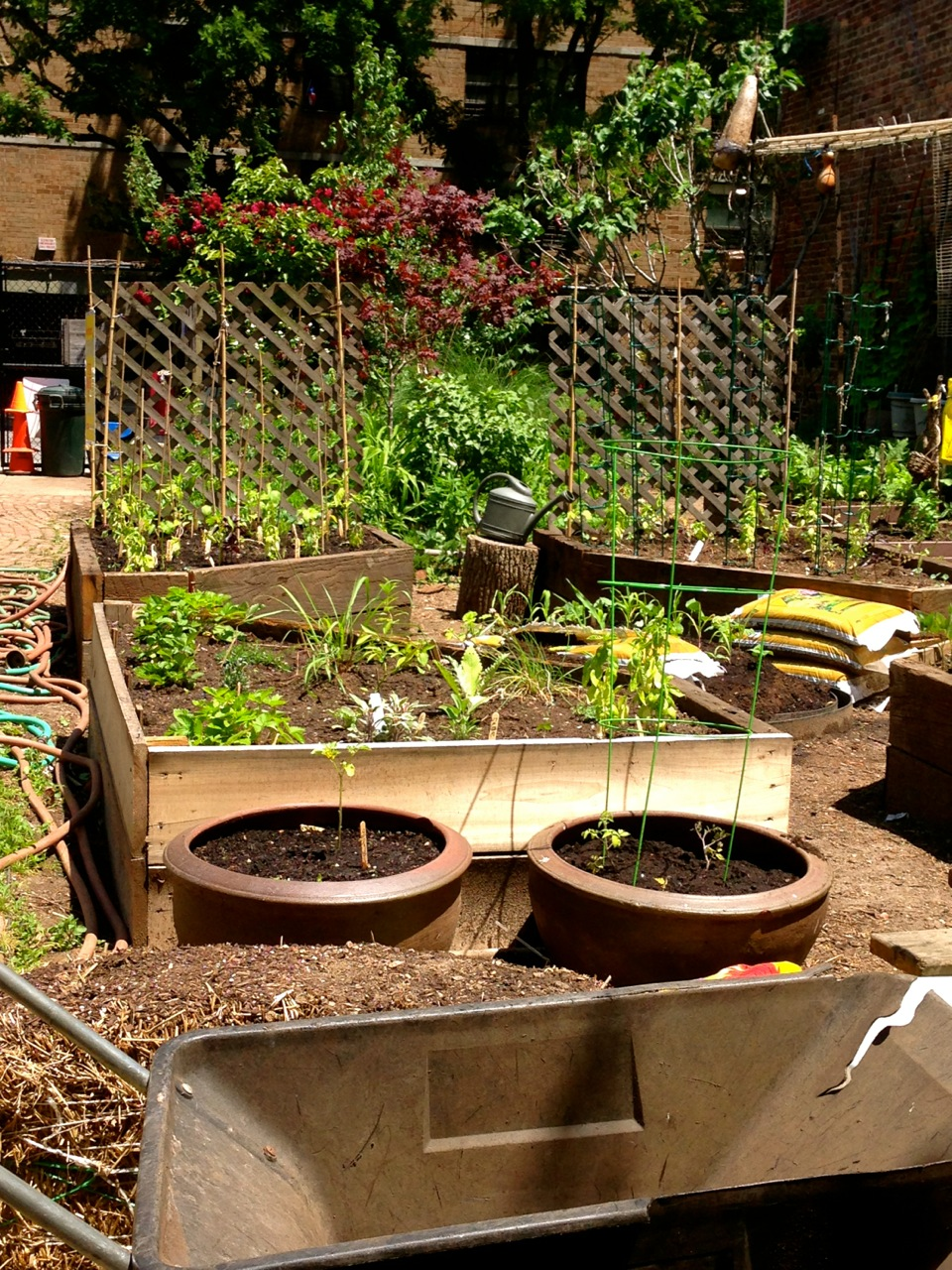 Campos\' Young Neighbors Help Plant Children\'s Garden | NYC Foodscape