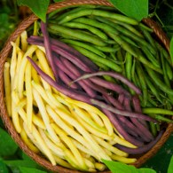 Different color string beans