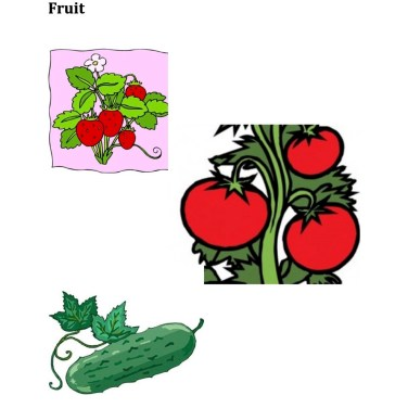 Parts of Plants Fruit