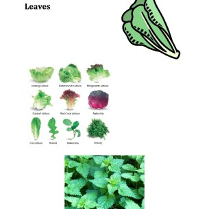 Parts of Plants Leaves
