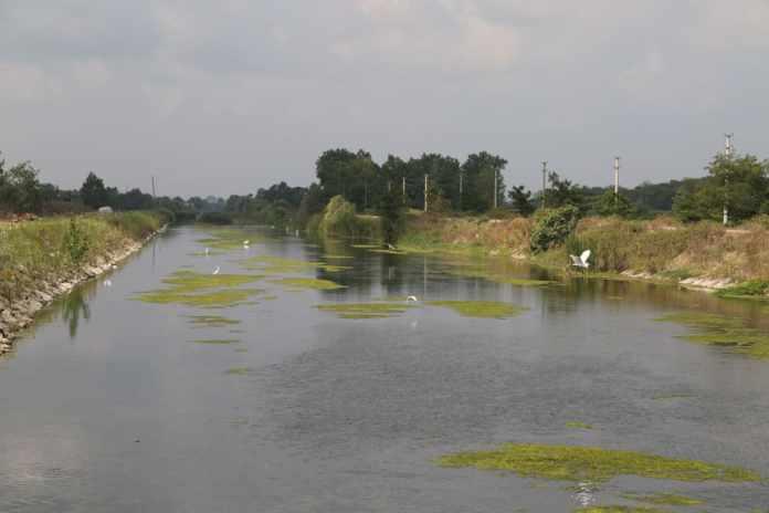 kızılırmak deltası kuş cenneti