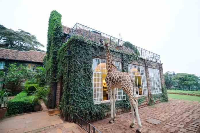 Giraffe Manor,Nairobi, Kenya