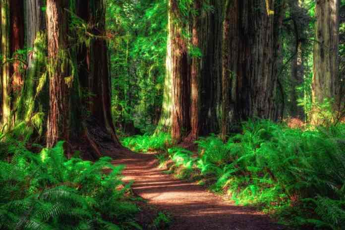 Redwood Ulusal Parkı, ABD
