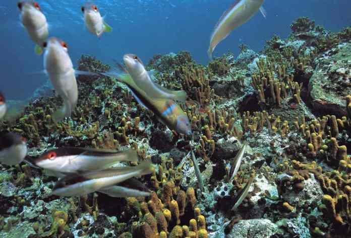 Ayvalık Resif