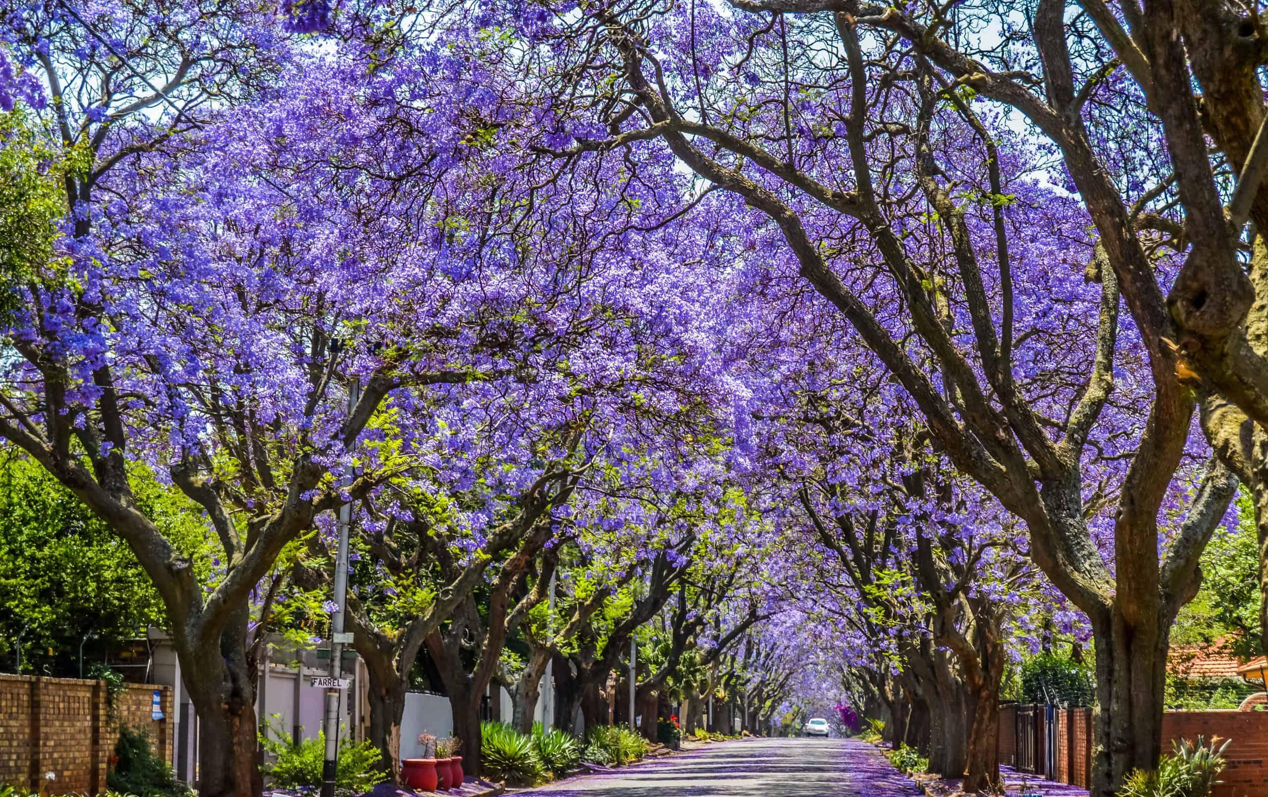 Murray Caddesi, Pretoria, Güney Afrika.jpeg
