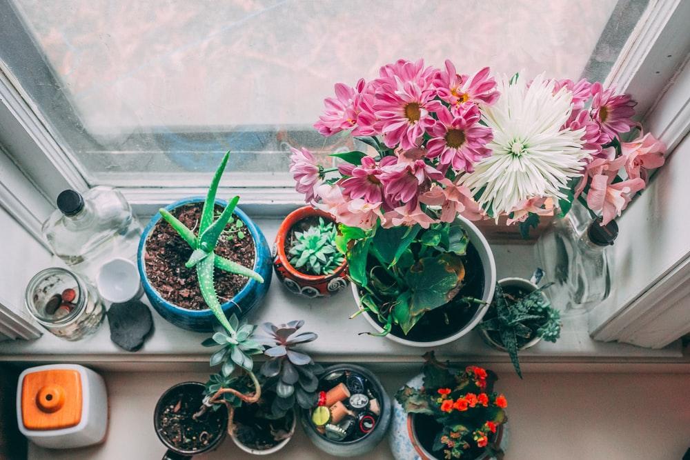 #PlantLovers? Temos uma secção repleta de plantas à tua espera title