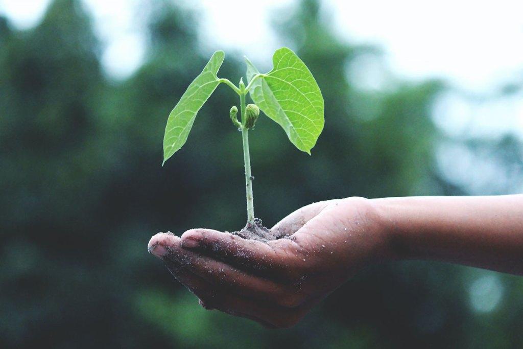 Fundo Ambiental: o apoio para tornar as casas mais sustentáveis title