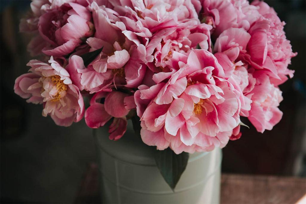 Guia para #plantlovers: como cuidar das plantas de inverno title