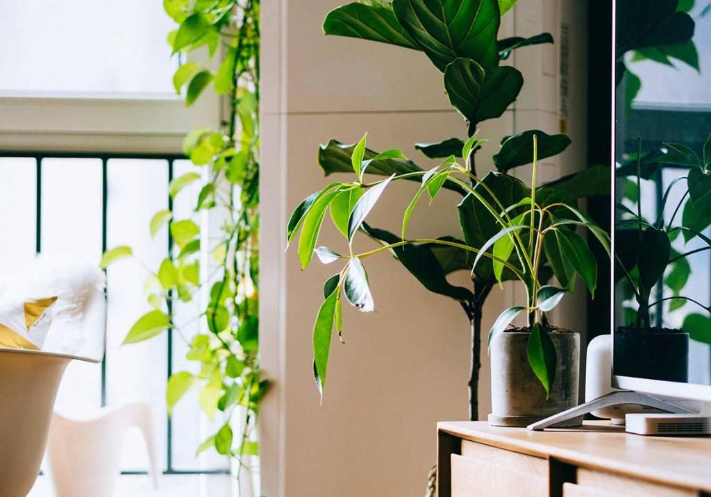 8 plantas que purificam o ar da tua casa title