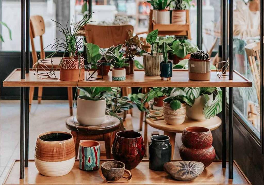 Vasos para plantas: como escolher o melhor para cada tipo de planta title